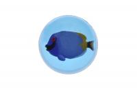 goki М'ячик-стрибунець Риба-хірург