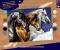 Sequin Art Набір для творчості PAINTING BY NUMBERS SENIOR Wild Horses